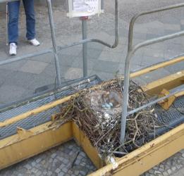 nest-250